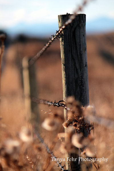 This barbwire fence surrounds the acreage that Tanya and her family call home.